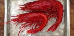 Carabineros Prawn Seafoods Com