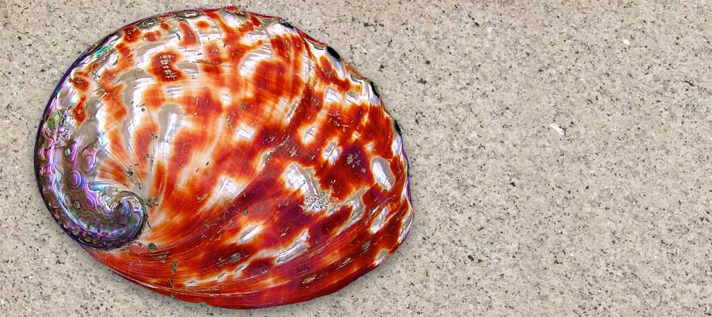 Red Abalone Seafoods Com